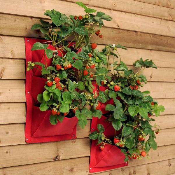 Pflanztaschen für die Wand »Strawberry« 2er Pack