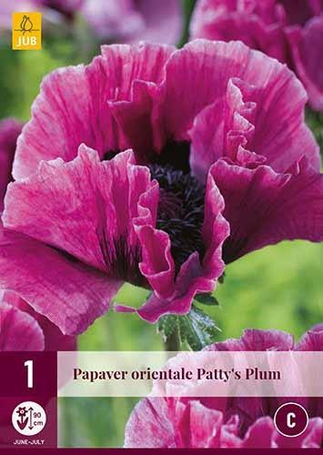 Orientalischer Mohn Patty's Plum