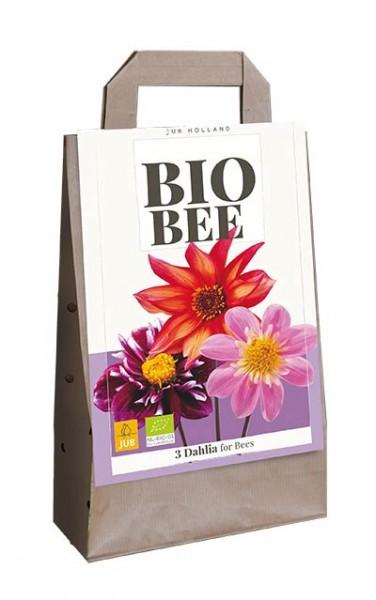 Dahlien Kollektion Bio Bee