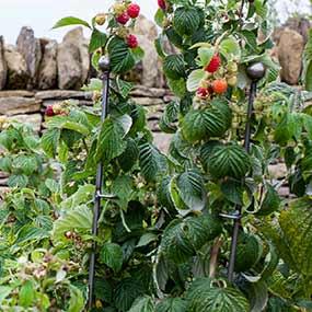 Pflanzenstützen im Nutzgarten