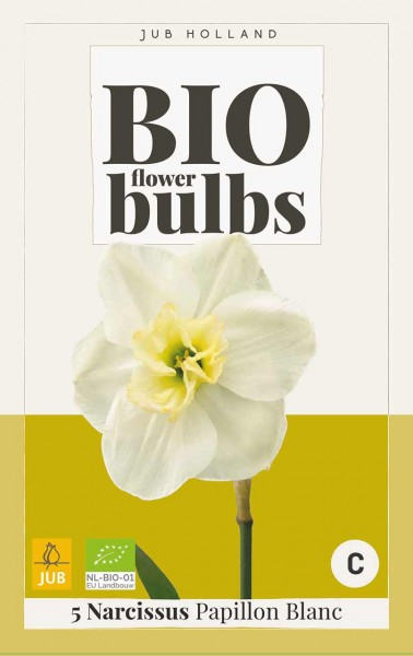 Narzisse Papillon Blanc