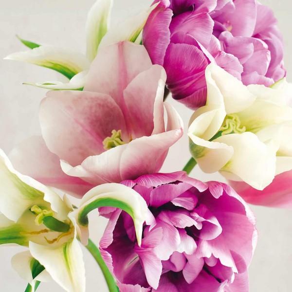 Tulpenkollektion »Lilac & Lilies«
