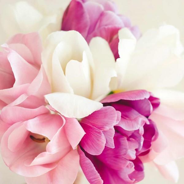 Tulpenkollektion »Classic Pink«