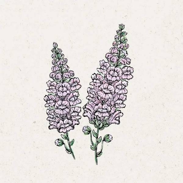 Blumensamen Antirrhinum Majus