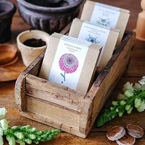 Samen- und Dahlienkollektionen