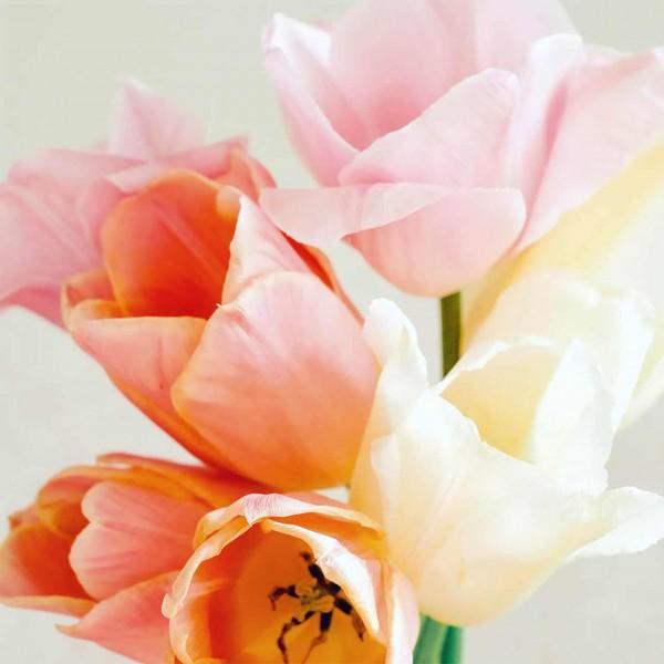 Tulpenkollektion Vintage Silk von Jora Dahl