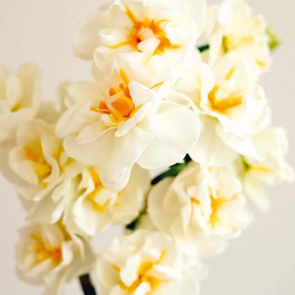 Narzissenkollektion »White Parfume«