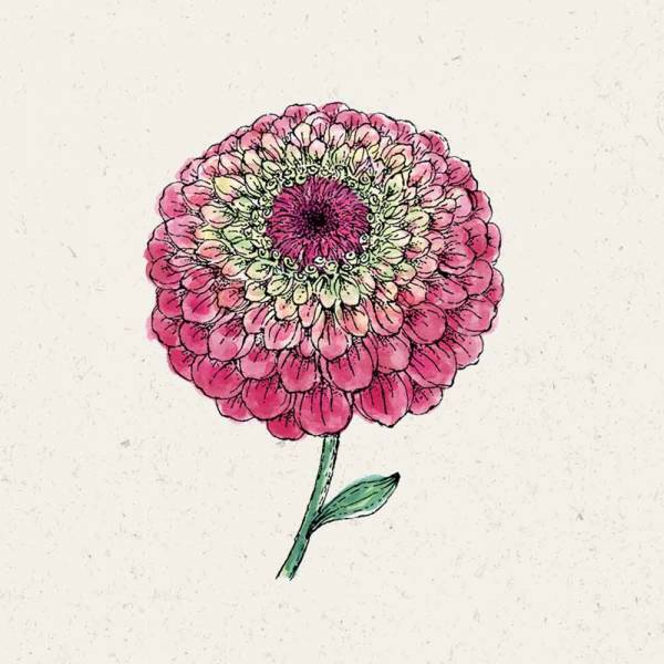 Blumensamen Zinnia elegans Queen Red Lime