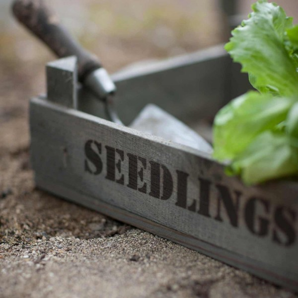 Anzuchtkasten »Seedlings Tray« - aus Holz