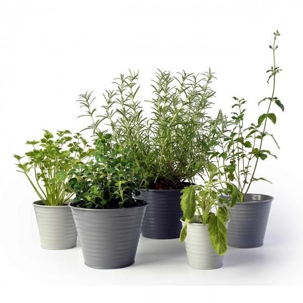 Pflanztöpfe »Ombré Pots«