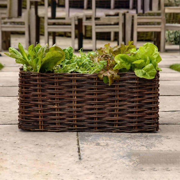 Pflanzset für Salate
