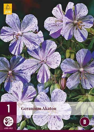 Geranium Akaton
