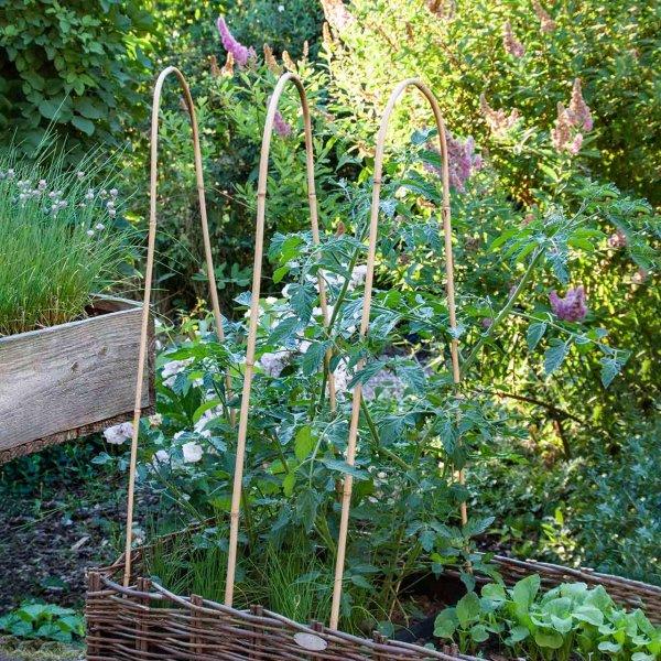 Pflanzenstützen »Bamboo Hoops« 3er Set