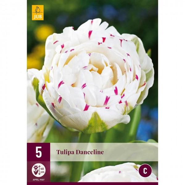 Tulpe Danceline