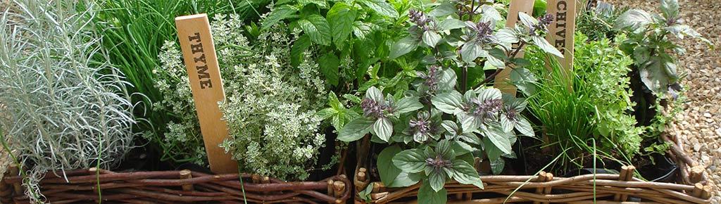 Pflanzen Labels