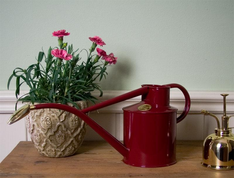 zimmergie kanne the garden shop. Black Bedroom Furniture Sets. Home Design Ideas