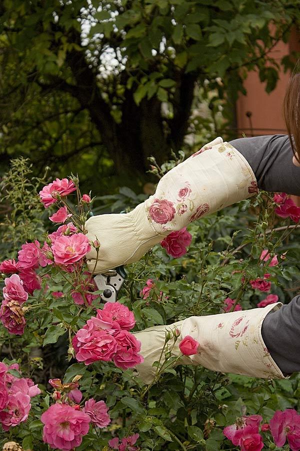 handschuhe the garden shop. Black Bedroom Furniture Sets. Home Design Ideas