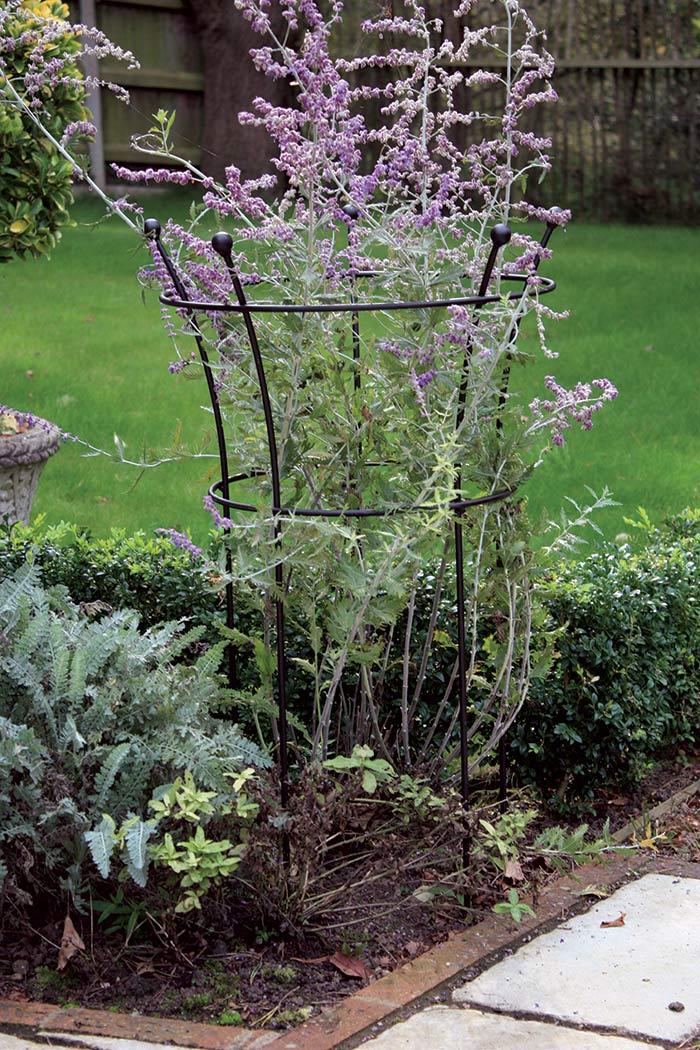 staudenhalter black trumpet the garden shop. Black Bedroom Furniture Sets. Home Design Ideas