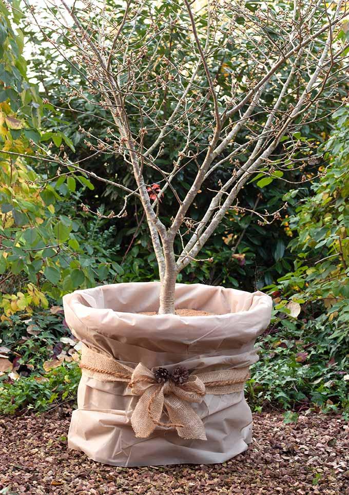 winterschutz pflanzen seite 3 the garden shop. Black Bedroom Furniture Sets. Home Design Ideas