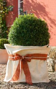 winterschutz pflanzen seite 2 the garden shop. Black Bedroom Furniture Sets. Home Design Ideas