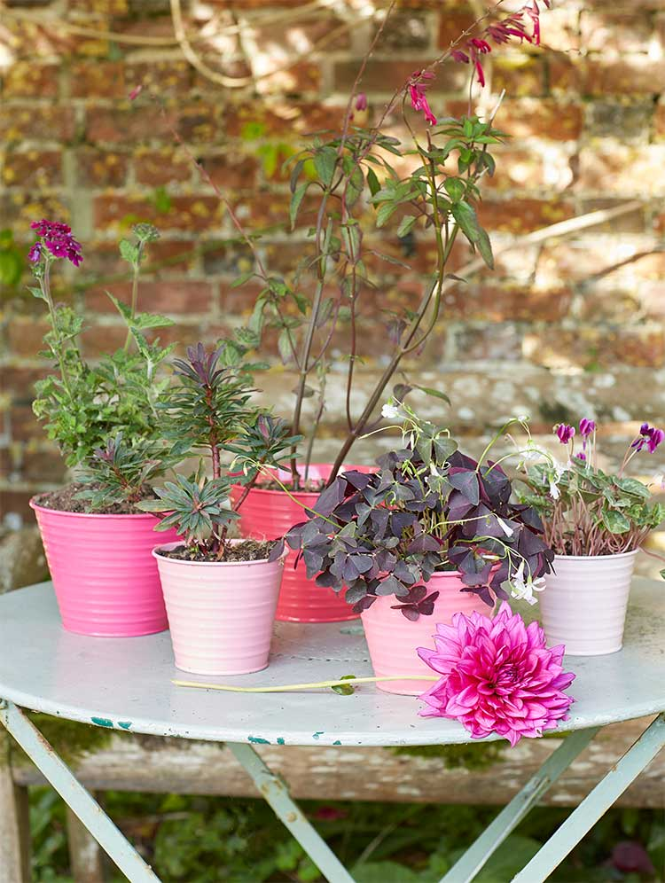 sophie conran collection seite 6 the garden shop. Black Bedroom Furniture Sets. Home Design Ideas