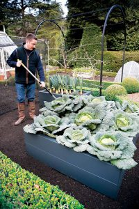 Hochbeet Gemüse