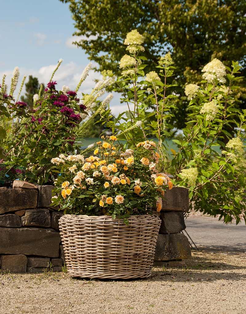 K Bel Bepflanzen großartig pflanzkübel bepflanzen galerie die designideen für badezimmer pictogramm info